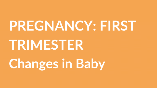 pregnancy-first-trimester-changes-in-baby